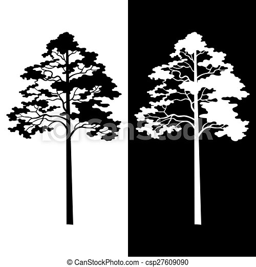 Pine Trees Black And White Silhouettes Isolated On Background