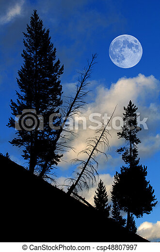 Pine Trees Forest with Full Moon - csp48807997