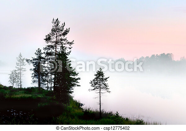 Pine trees in foggy landscape - csp12775402