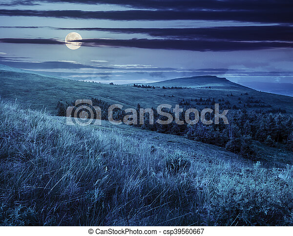 pine trees in mountain valley at night - csp39560667