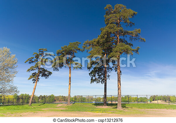 pine trees in the park - csp13212976