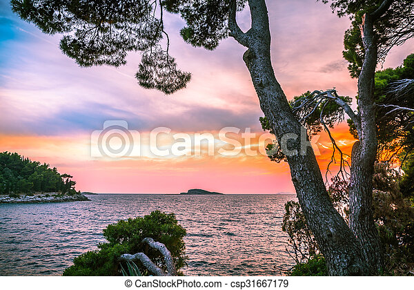 pine trees leaning towards the sea in front of sunset - csp31667179