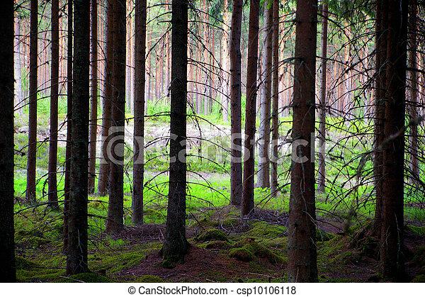 Pine trees - csp10106118