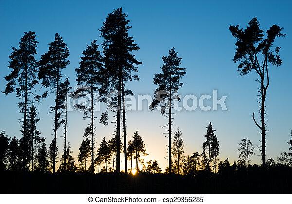 Pine trees. - csp29356285
