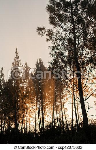 Pine trees silhouettes - csp42075682