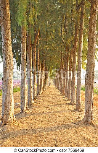 Pine trees - csp17569469