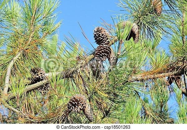 Pine trees - csp18501263