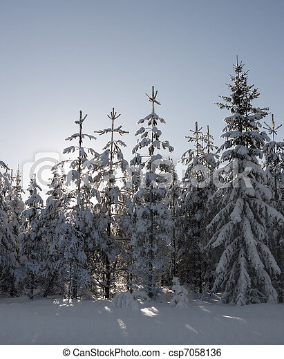 Pine trees - csp7058136