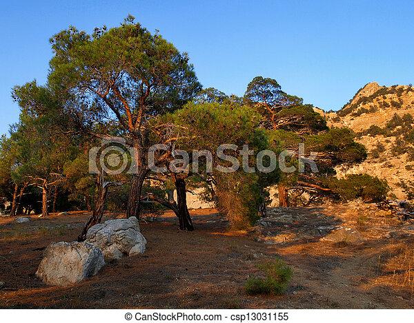 Pine trees. - csp13031155