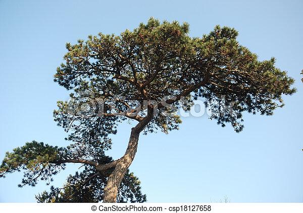 Pine trees - csp18127658