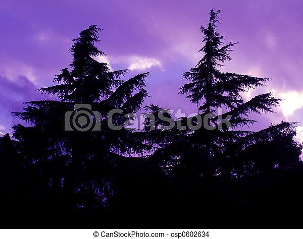 Pine trees - csp0602634