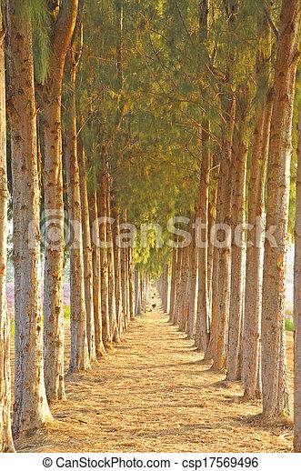 Pine trees - csp17569496