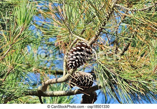Pine trees - csp18501330