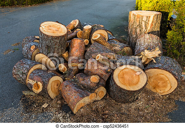 Pine wood logs from one pine tree lying in a heap on the ground - csp52436451