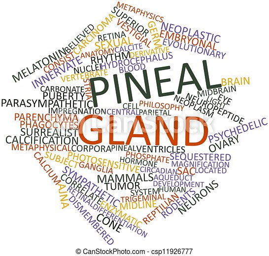 Pineal gland - csp11926777