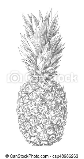 pineapple drawing by hand on white. vector illustration - csp48986263