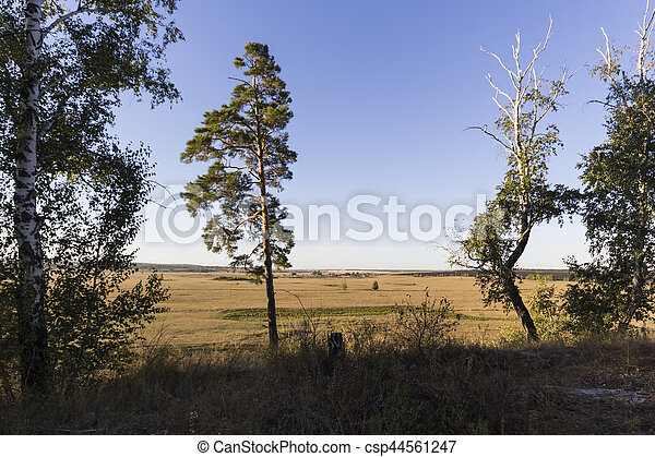 Pines on a background of blue sky - csp44561247