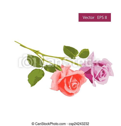Pink and blue roses - csp24243232