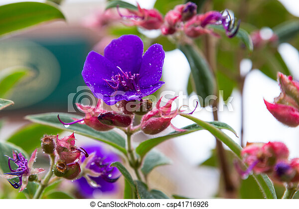 Pink And Purple Fuschia Variety Flowers Blooming In Autumn In