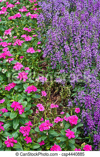 Pink and purple ground cover flowers ground covers in a garden with pink and purple ground cover flowers csp4440885 mightylinksfo