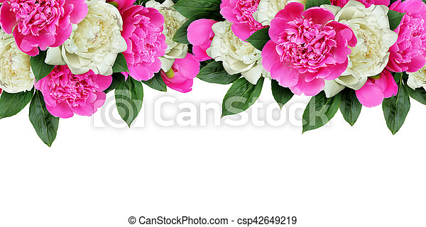 Pink and white peonies flowers header isolated on white stock pink and white peonies flowers header isolated on white stock photography search pictures and photo clip art csp42649219 mightylinksfo
