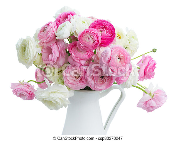 Pink And White Ranunculus Flowers Pink And White Ranunculus Fresh