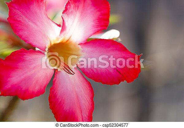 Pink Azalea Flowers Pattern Background