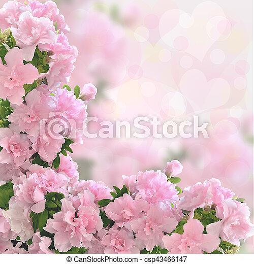 Pink Azalea Flowers Romantic Background With Bokeh Light Valentine