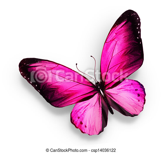 https://comps.canstockphoto.com/pink-butterfly-isolated-on-white-clip-art_csp14036122.jpg Pink Butterfly Graphics