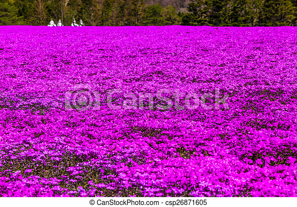 Pink carpet of ground moss phlox flowers pink carpet of ground moss phlox csp26871605 mightylinksfo