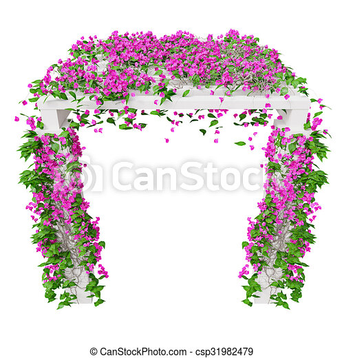 Pink climbing flowers bougainvillea 3d graphic isolated object on pink climbing flowers bougainvillea csp31982479 mightylinksfo