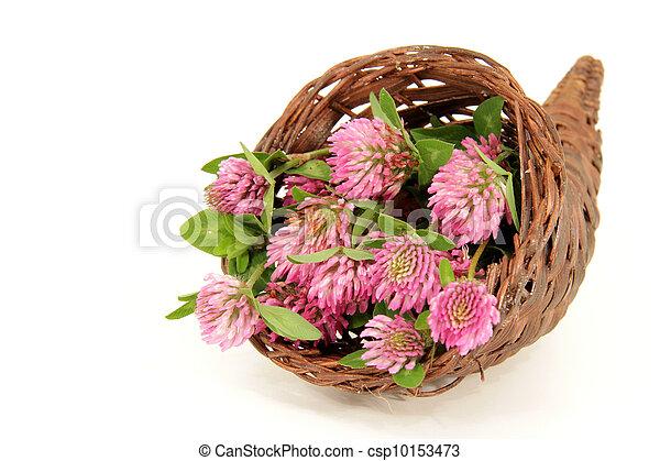 pink clover blooms - csp10153473