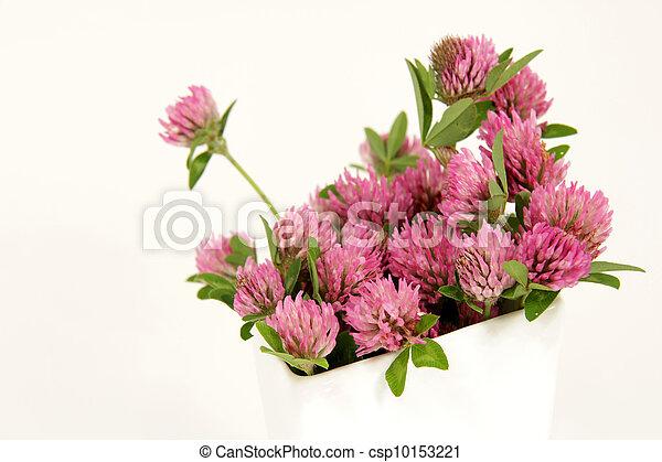 pink clover blooms - csp10153221