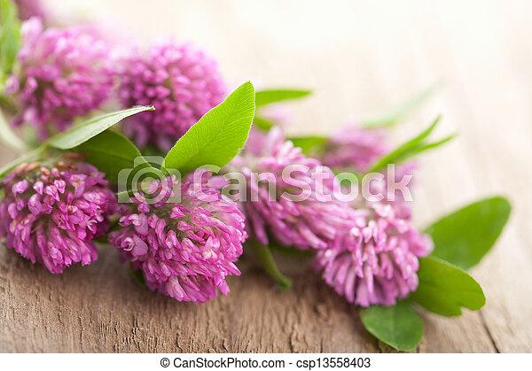 pink clover flower - csp13558403