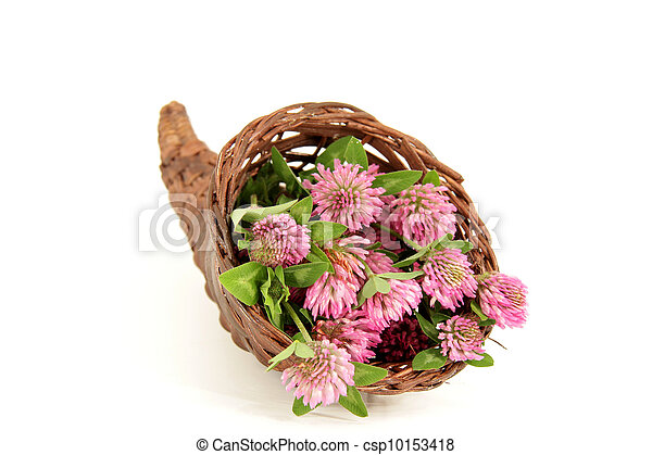 pink clover - csp10153418
