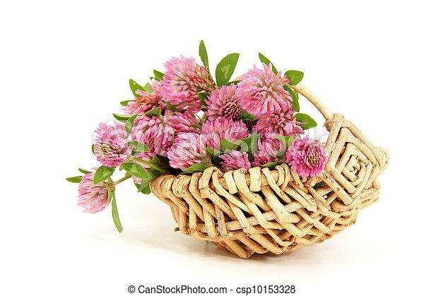 pink clover - csp10153328