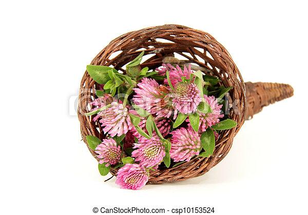 pink clover - csp10153524
