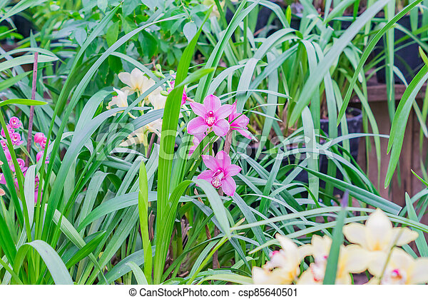 pink exotic orchid flowers in botanical garden - csp85640501