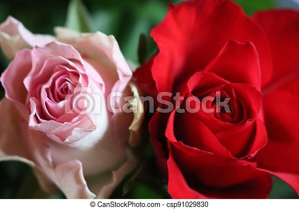 pink flower beautiful skewer-colored skewers natural leaves - csp91029830