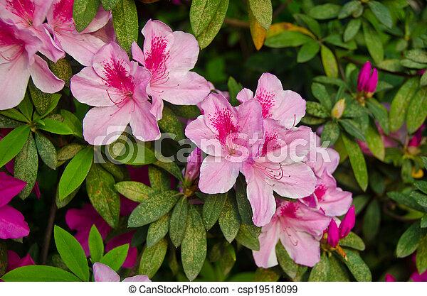 Pink Flower Bush Close Up