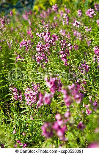 Pink flower field - csp8530091
