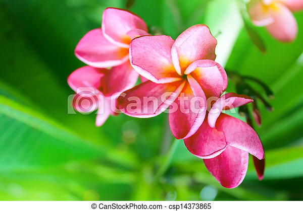 pink flower on a green background - csp14373865
