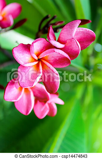 pink flower on a green background - csp14474843