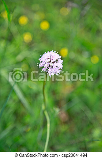 Pink flower on the field - csp20641494