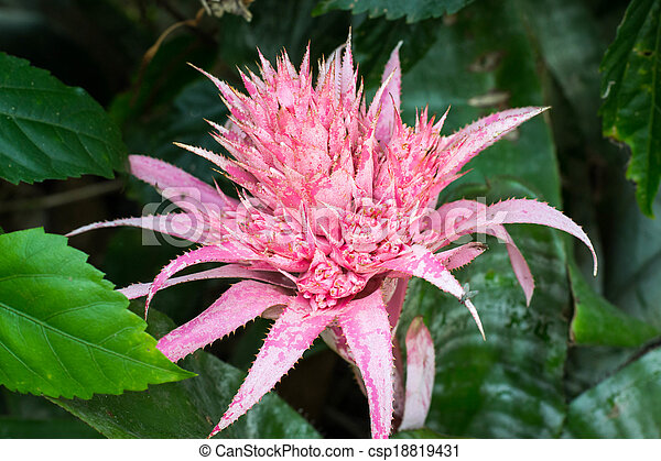 Pink Flower Paper Like Pink Flower From Succulent Plant