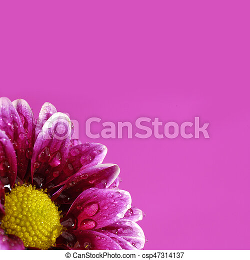Pink flower with colored background yellow center pink flower with pink flower with colored background yellow center csp47314137 mightylinksfo