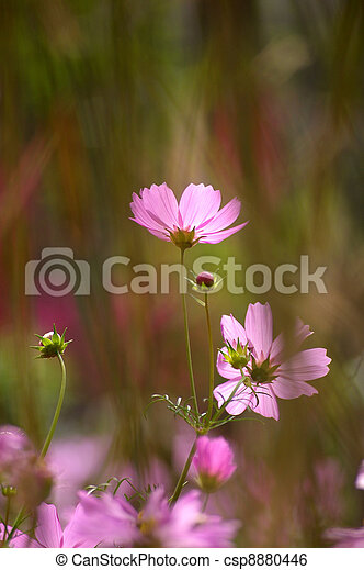 Pink flowers background - csp8880446