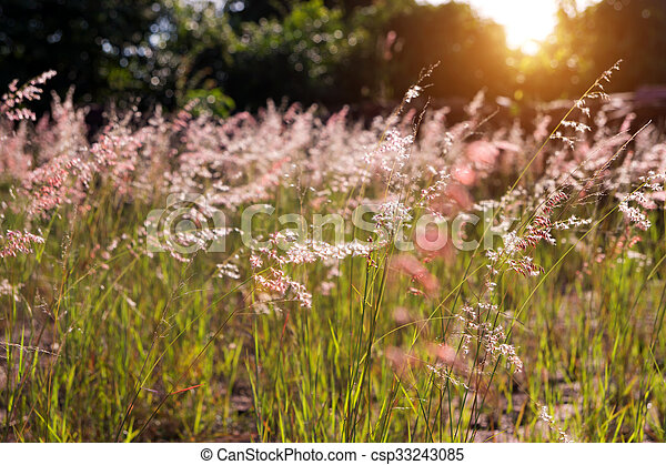 Pink flowers grass blurred bokeh background vintage pink flowers pink flowers grass blurred bokeh background vintage csp33243085 mightylinksfo