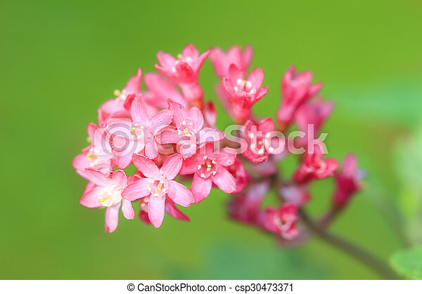 Pink flowers green background - csp30473371