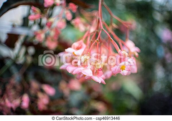 Pink Flowers in Blurred Background - csp46913446